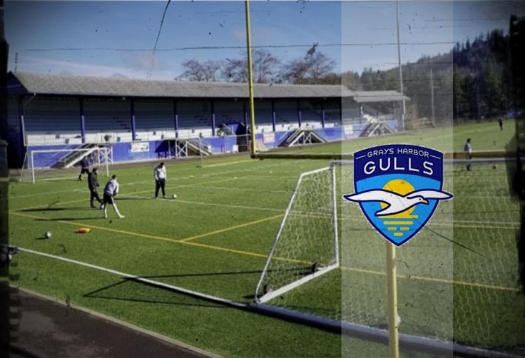 gulls_cover
